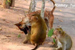 Amazing Dog and monkey Vdo/ Dog VS Monkey tube