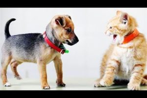 Animal Fights| Dogs vs Cats - Funny Animal Fighting Compilation #16 | Funny Pie