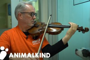 Broadway violinist performs for abused animals | Animalkind