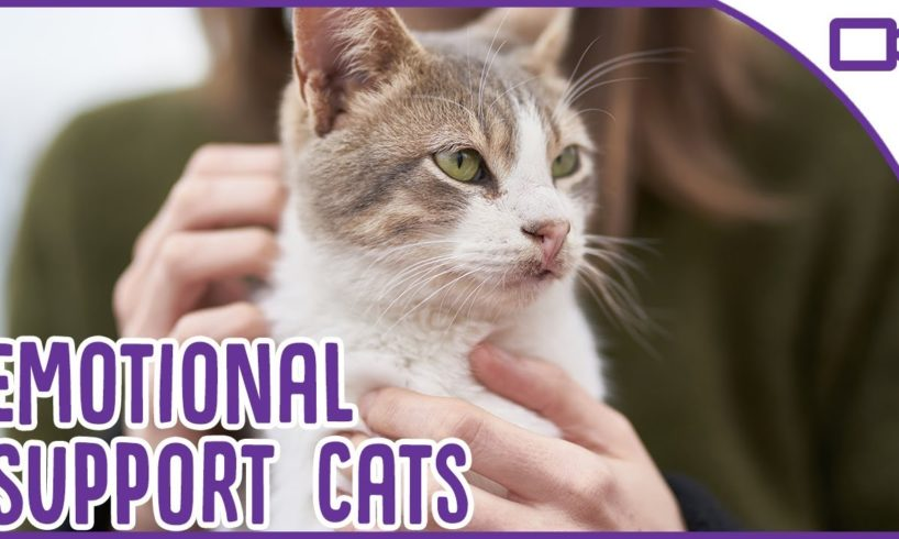 Cats as Emotional Support Animals!