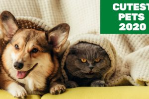 Cutest Pets Doing Funny Things 2020