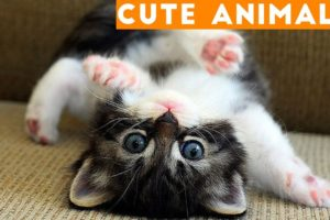 Cutest Pets of the Week Compilation January 2018   Funny Pet Videos