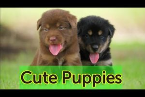 Cutest Puppies Playing in the Park | Cute Puppies