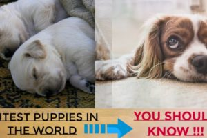 Cutest Puppies in the World / 7 breeds & their characteristic !!!