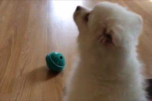 Cutest Puppy Noises! (Compilation)