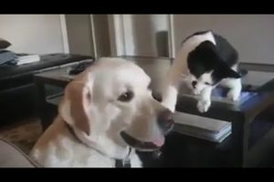 Dog 🐕 and cat 🐈 funny playing video 2020 | Lods Tv