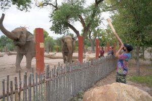 Elephants joyfully react to didgeridoo performance - ABQ BioPark Zoo