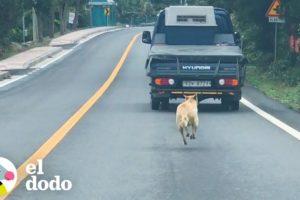 Esta mamá persigue a un camión que lleva a sus cachorros | El Dodo
