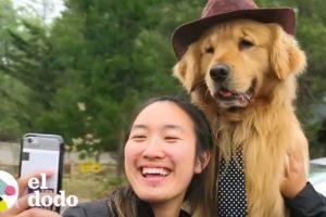 Este perrito es alcalde de su pueblo | El Dodo