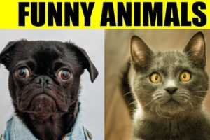 FUNNY ANIMAL PICTURES - Funniest Photos of Animals Slideshow