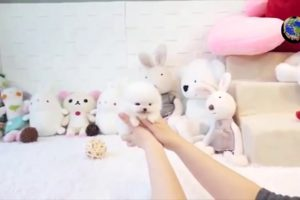 FUNNY ANIMALS 1 ** Doggies SO CUTE, Relaxing Small Babies Dogs Playing With Woman 2019 ! **