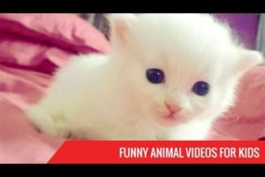Funny Animal Videos for Kids