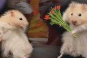 Funny Pets & Animals - Pusong Bato Instrumental