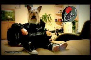 Happy Birthday Rock Song - Dog playing guitar - Funny Greeting Card - Human Dog