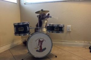 Happy Dog Playing Drums
