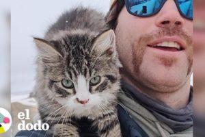 Hombre encuentra a un gatito congelado cuando iba caminando | El Dodo