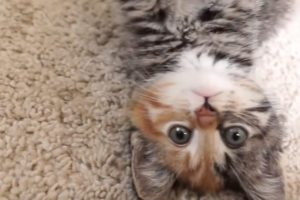 I'm Little Maci! *** Am I the cutest kitten on Youtube? *** ♡
