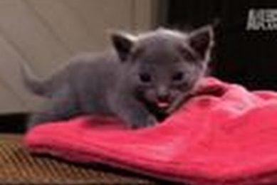 Kitten Afraid to Climb | Too Cute!