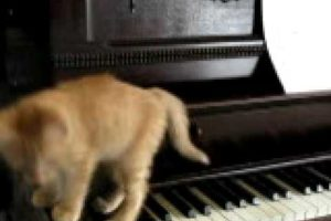 Kitten Playing the Piano!