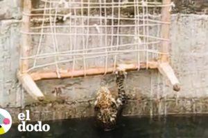 Leopardo casi ahogado es rescatado de un pozo | El Dodo