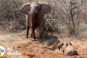 Mamá elefante va a proteger a su bebé con todo lo que tiene | El Dodo