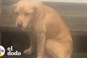 Perrita entró de milagro por las puertas de su nuevo hogar   El Dodo