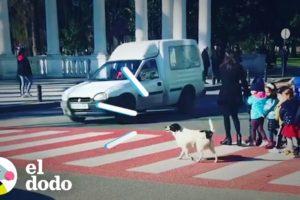 Perro callejero siempre ayuda a los niños a cruzar a calle | El Dodo