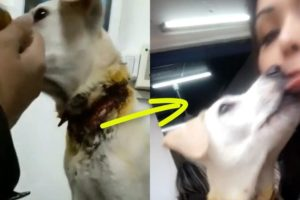 Rescue Poor Dog Was Almost Slaughtered and Happy Ending