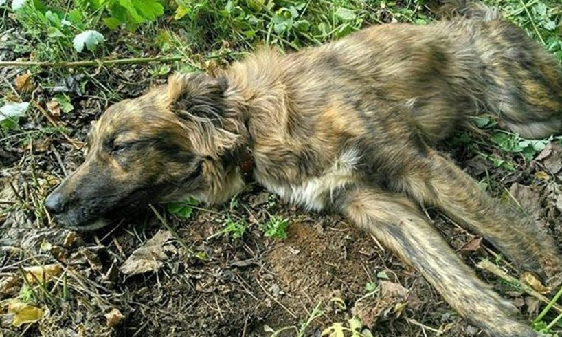 Rescue Stray Dog Was Shot Make Broken The Marrow & Amazing Transformation