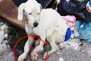 Rescue an Abandoned Dog In Serious Bad Condition Will Make Warm Your Heart