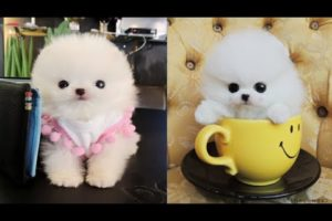So Cute Puppies  - Funny and Cute animals Videos Compilation #2 - Create 1 Billion Channel