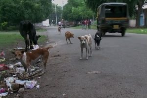 Stray Puppies Rescued From Sewer Pipe By Animal Warriors In India