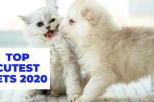 THE CUTEST PETS In The World 2020
