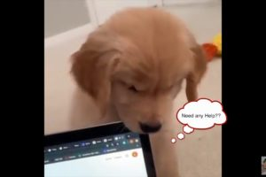 Talking puppies|Cute baby animals videos|cutest moment of the animals|Cutest puppies compilation #6