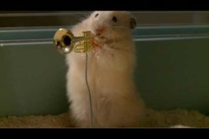 The drench Clever Hamsters jazz band - official ad
