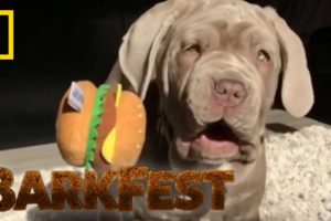 Top 5 Cutest Puppy Fails | BarkFest