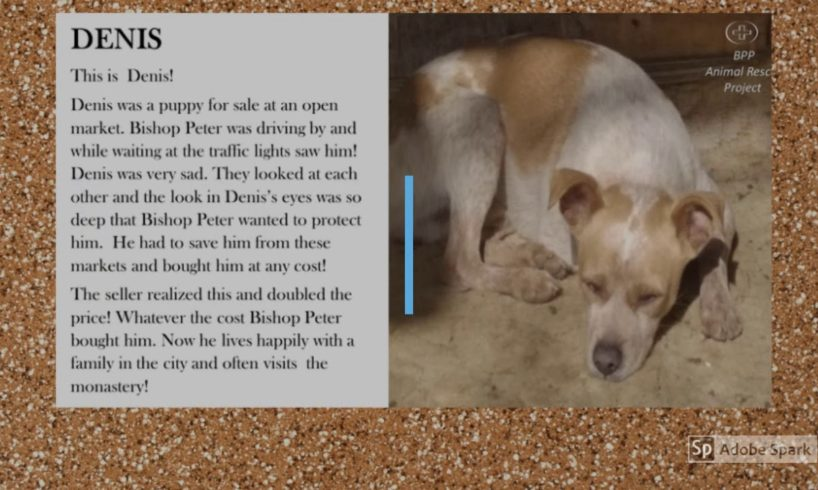 Bishop Peter Patrikios Animal Rescue Project video