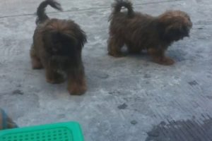 Cute Puppies Playing