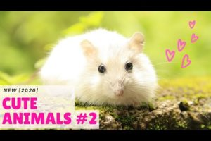 Cute animals | Cute animals compilation(part-2) | Cute puppies [NEW 2020]