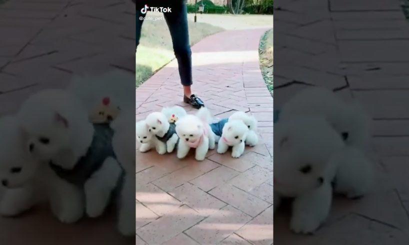 So cute puppies 👇👇👇👍👍