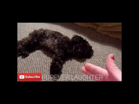 FUNNY ANIMALS PLAYING DEAD COMPILATION!!
