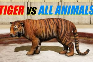 Far Cry 4 - Animal Fight: Tiger vs All Animals