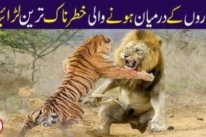 WILDEST ANIMAL FIGHTS CAUGHT ON CAMERA