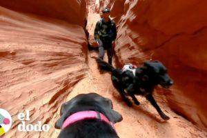 Hombre lleva a sus perros tras las mejores aventuras | El Dodo