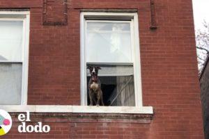 Mujer rescata a un perro de una casa abandonada I El Dodo