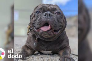 Pepinillo, la perrita sin orejas más feliz del mundo | El Dodo