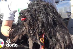 Perrita callejera se transforma en una hermosa cachorrita | El Dodo