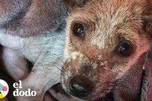 Perrita encontrada en las calles tiene increíble transformación | El Dodo