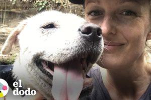 Perro abandonado se transforma en un guapo cachorro I El Dodo