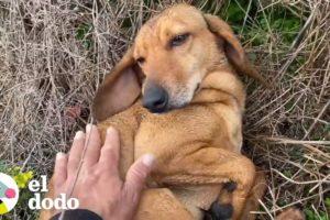 Perro llega por su cuenta a un refugio para ser rescatado | El Dodo
